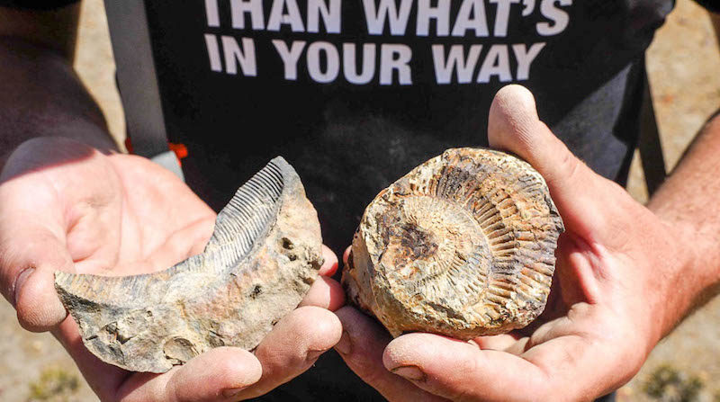 a photo of fossils from nepal